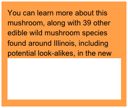 "You can learn more about this mushroom, along with 39 other edible wild mushroom species found around Illinois, including potential look-alikes, in the new book ""Edible Wild Mushrooms of Illinois and Surrounding States"" (2009 University of Illinois Press)."